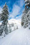 A path cover with snow in paradise area,scenic view of mt Rainier National park,Washington,USA.. Stock Image