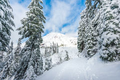 A path cover with snow in paradise area,scenic view of mt Rainier National park,Washington,USA.. Stock Photography