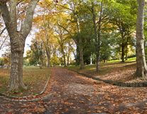 Path covered with autumn leaves Royalty Free Stock Image
