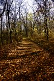 Path covered with autumn leaves. Autumn morning on the path that leads to the top of the hill Stock Photos