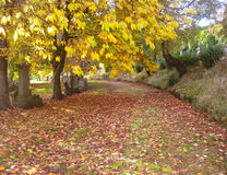 Path covered in autumn leaves Royalty Free Stock Image