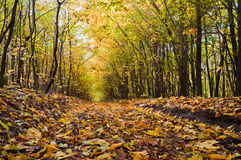 Path covered with foliage in autumn forest. Autumn forest. Path covered with foliage in autumn forest Royalty Free Stock Images