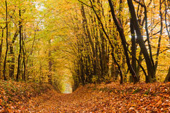 Path covered with foliage in autumn forest. Autumn forest. Path covered with foliage in autumn forest Royalty Free Stock Photography