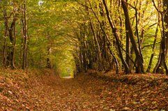 Path covered with foliage in autumn forest. Autumn forest. Path covered with foliage in autumn forest Royalty Free Stock Image