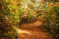 Path covered in leaves in forest Royalty Free Stock Image