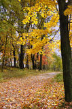 Path Covered with Maple Leaves. Path Covered with Fallen Maple Leaves in Autumn Stock Images
