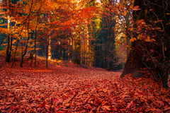 Path covered with orange and red leaves. Stock Photos