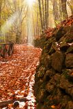 Path covered by red leaves. Path illuminated by sun beam Stock Photo