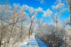 The path covered with snow in forest with rime and blue sky Stock Photos