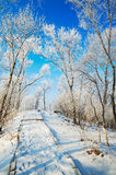 The path covered with snow in forest with rime Royalty Free Stock Photo