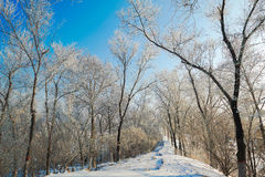 The path covered with snow and forest with rime and snow Stock Photos