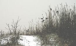 Path covered in snow and some birds Royalty Free Stock Images