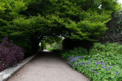 Path covered with vegetation Stock Photo