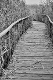 Path covered by wood Stock Photo