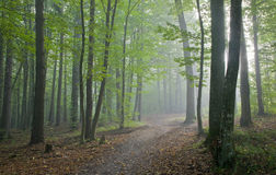 Path crossing misty autumnal forest Stock Photos