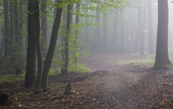 Path crossing misty autumnal forest Stock Images