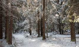Path crossing snowy forest Stock Image