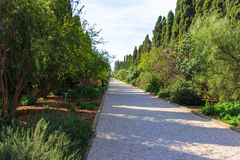 Path of crushed stone with trees and shrubs around the edges Royalty Free Stock Photo
