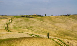 Path in Curvy Tuscany Landscape-Val dOrcia, Italy Stock Image