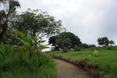 Path cut through Green overgrown grass in botanical garden Royalty Free Stock Photo