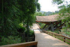The path cuts across the forest. The path cuts across the bamboo forest to village Royalty Free Stock Photos