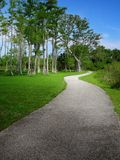 Path and cypress Stock Image