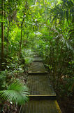 Path in Daintree National Park Queensland, Australia. Path in Daintree National Park in the tropical north of Queensland, Australia founded in 1981 and became a stock photography