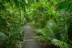 Path in Daintree National Park Queensland, Australia. Path in Daintree National Park in the tropical north of Queensland, Australia founded in 1981 and became a stock images