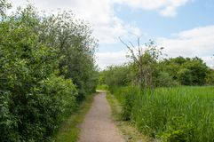 Path in the Danish nature in Ballerup. On a summer day Royalty Free Stock Photos