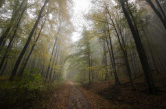 Path in a dark autumn forest with fog Stock Image