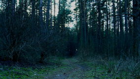 The path in the dark forest. stock video footage