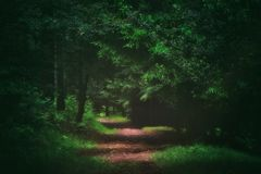 Path in the dark forest. With sunlight royalty free stock photography