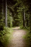 Path in dark moody forest stock image