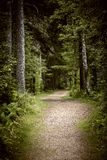 Path in dark moody forest Stock Photography