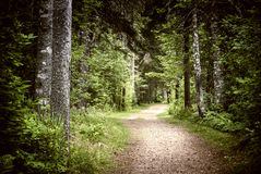 Path in dark moody forest Royalty Free Stock Image
