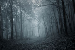 Path in a dark mysterious forest with fog Royalty Free Stock Image