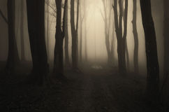 Path in a dark mysterious forest with fog Royalty Free Stock Photos