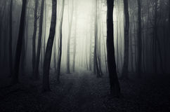 Path in a dark mysterious forest on Halloween