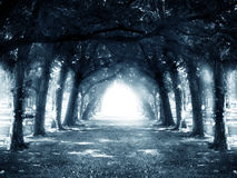 Path in dark mystery forest. Halloween background Royalty Free Stock Photos