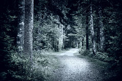 Path in dark night forest royalty free stock photo