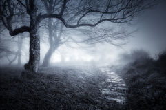 Path in dark and scary forest. Path in a dark and scary forest Royalty Free Stock Images
