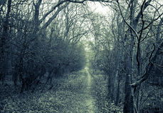 Path in the dark scary park Royalty Free Stock Photos