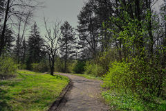 Path in the dark woods Royalty Free Stock Photography