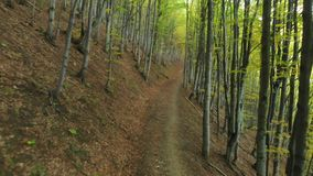 Path in the Deciduous Forest. Carpathian Mountains. Ukraine. Aerial fly under trees. Beech alley stock video