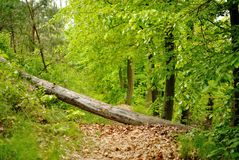Path in deciduous forest Stock Image
