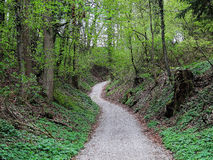Path through deciduous forest at spring Stock Images