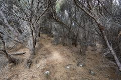 Path deep into dried out forest Royalty Free Stock Photo