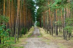 Path in deep forest Stock Photo