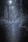 Path in the deep forest. Path in the deep forest at night time Royalty Free Stock Photos