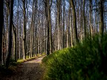 Path in dense forest royalty free stock photography